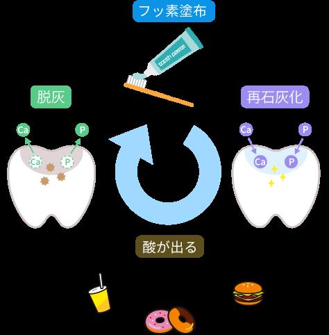 フッ素塗布のサイクル図